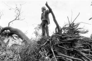 Kew Gardens - fallen Tree of Heaven, 19 October 1987 (Archive ref. GUA/6/9/1/1/W box 4)