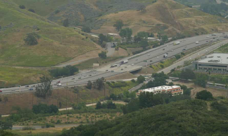 California freeway that mountain lions would have to cross