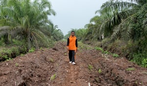 Farmer Pak Dahlan walks through a palm oil plantation in Dosan, Sumatra