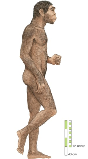 Homo erectus first appeared in Africa more than 1.8m years ago.