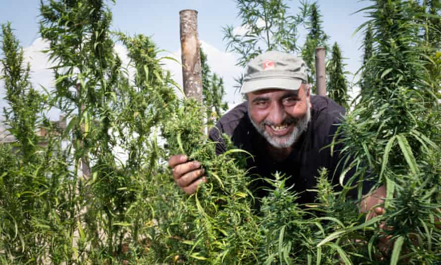 Salvo Scuderi at his hemp farm outside Catenanuova, Sicily.