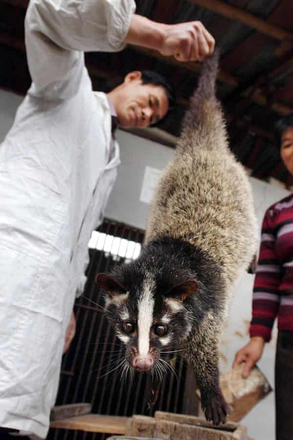 A civet cat is inspected on 10 November 2004 at a farm in Lu'an, China
