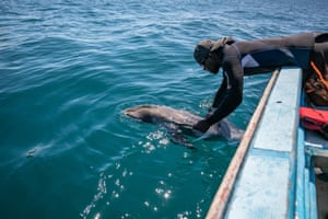 A fisherman picks up a dead dolphin from the Indian Ocean off Grand Sable, Mauritius