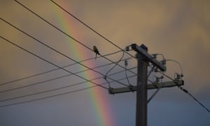 A bird sits on electricity wires as a rainbow can be seen in the background