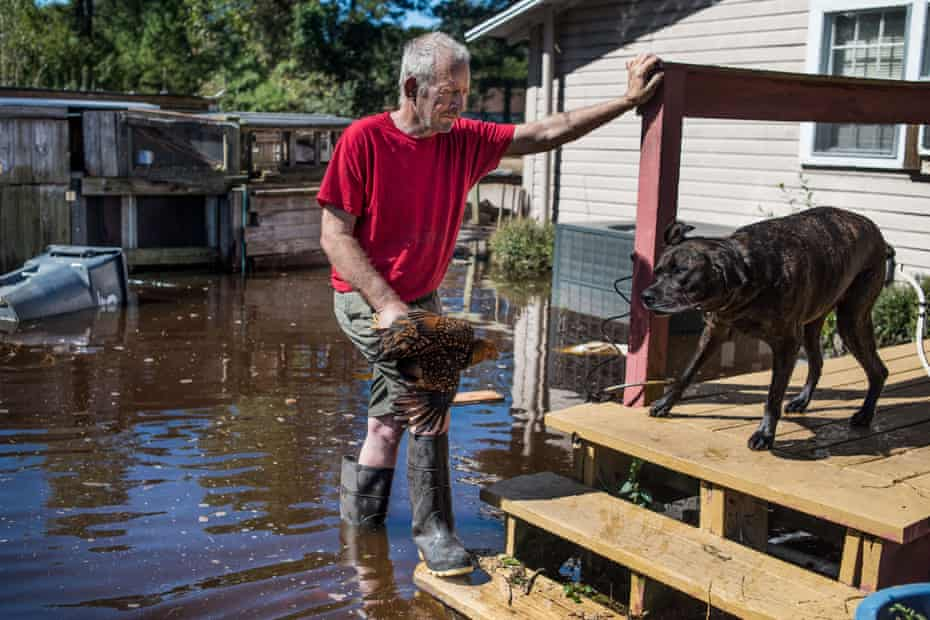 George Aubert rescues one of his chickens from rising floodwaters caused by remnants of Hurricane Matthew on 11 October 2016 in Fair Bluff, North Carolina.