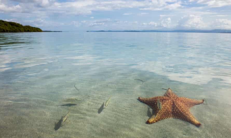 Starfish beach on Isla Colon, Bocas del Toro, Panama.