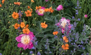 Jody Lidgard's Montessori Centenary garden
