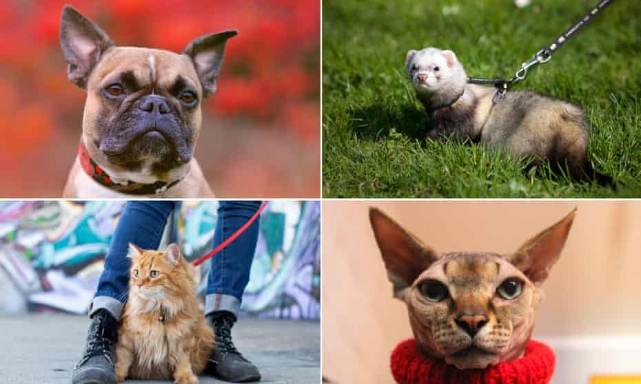 Composite of pet photos: Cat Dog Ferret