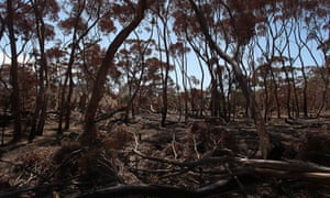 File photo of bushfire-affected trees stacked alongside the Playford Highway in Parndana, Australia
