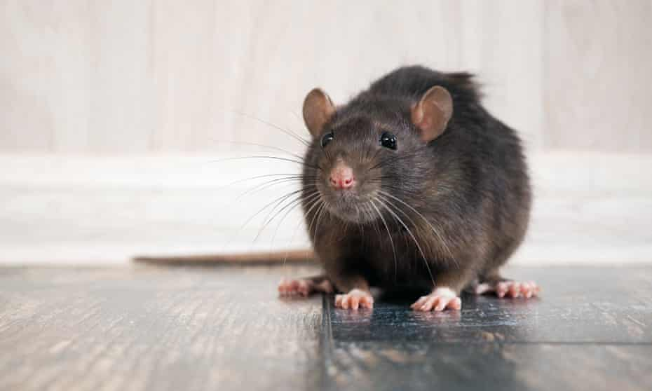 'No home is completely rodent-proof.'