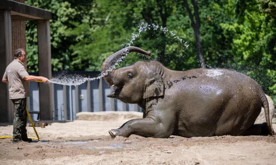 A zookeeper sprays water on an Asian elephant at a zoo in Berlin on Tuesday.