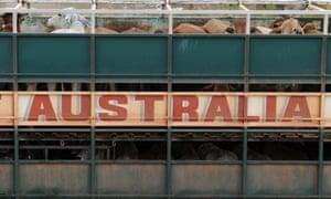 Live cattle exports Australia