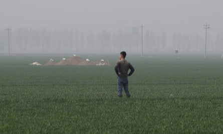A field inside the new special economic zone of Xiongan New Area.