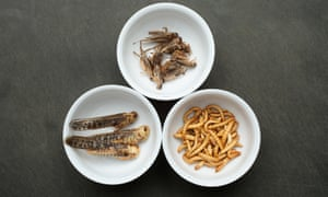 Dried grasshoppers, mealworms and crickets seasoned with spices in Berlin, Germany