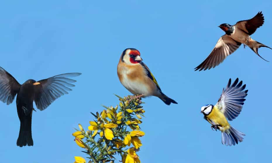 Tweeting out now ... blackbird, goldfinch, blue tit and swallow.