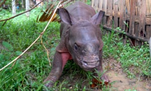 A baby rhino rescued by wildlife crew was taken to a conservation centre in Assam.
