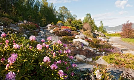 Rhododendron in the Arctic alpine botanic garden in Tromsø.