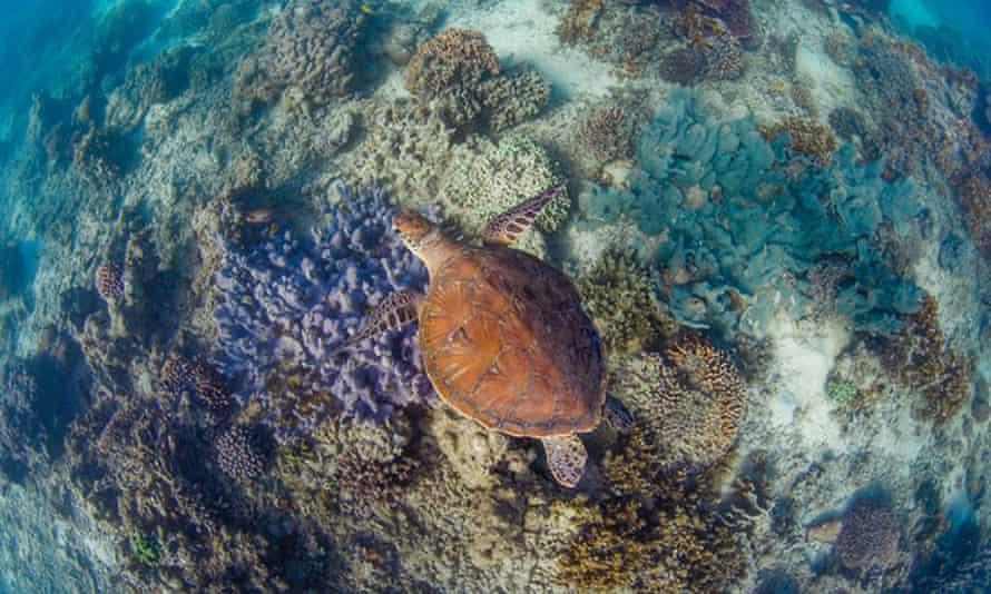 Exmouth Gulf turtle