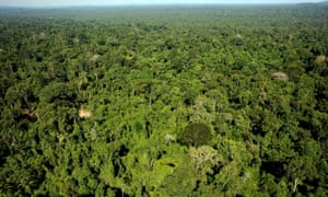 An aerial view of the Amazon forest reserve of Trairao, in Para State, northern Brazil