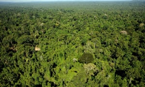 Amazon forest in northern Brazil. 'Each of us needs one mature tree for our metabolic equilibrium,' writes John Twidell.