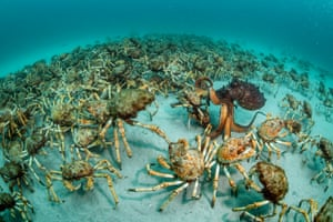 Winner, Behaviour: Invertebrates category  Crab Surprise by Justin Gilligan, Australia