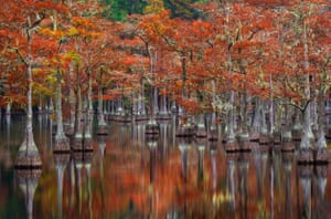 Georgia, USATrees are reflected on the surface of a lake in the Okefenokee swamp lands.