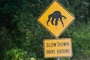 A street sign warning of caution when driving around the robber crab.