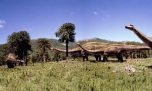 A Diplodocus herd grazing on monkey puzzle tree foliage.