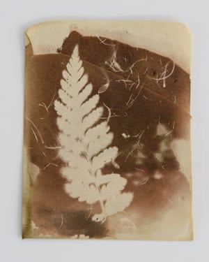 Cyathea australis. 8cm x 10 cm photogenic drawing made with silver nitrate and light on antique paper. Created as part of the Programme for Experimental Atmospheres and Climate at University College Dublin, the image was generated in carboniferous glacial atmospheres of 400 ppm CO2 and 24% O2.