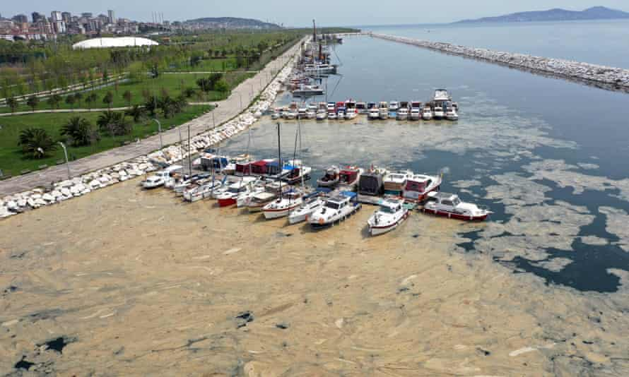 An aerial view of sea snot in Istanbul.