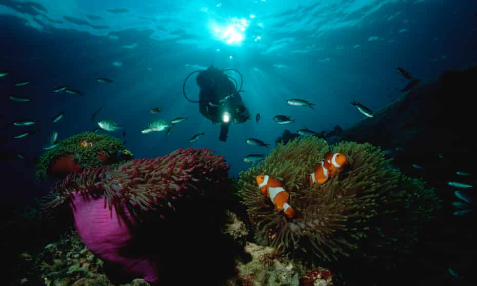 Clownfish and scuba diver, Amphiprion ocellaris, South Chinese Sea, Malaysia,