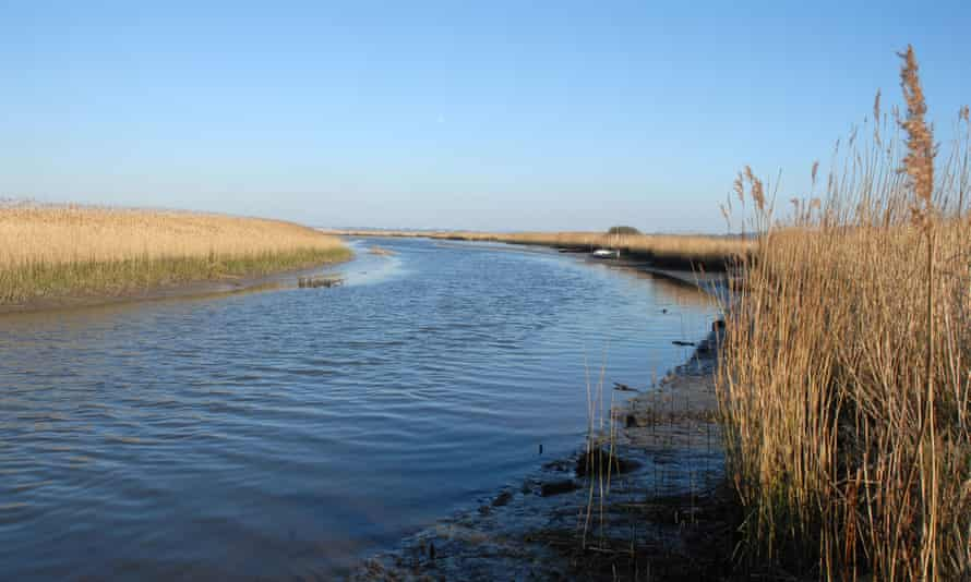 Reed beds in estuary, Dorset