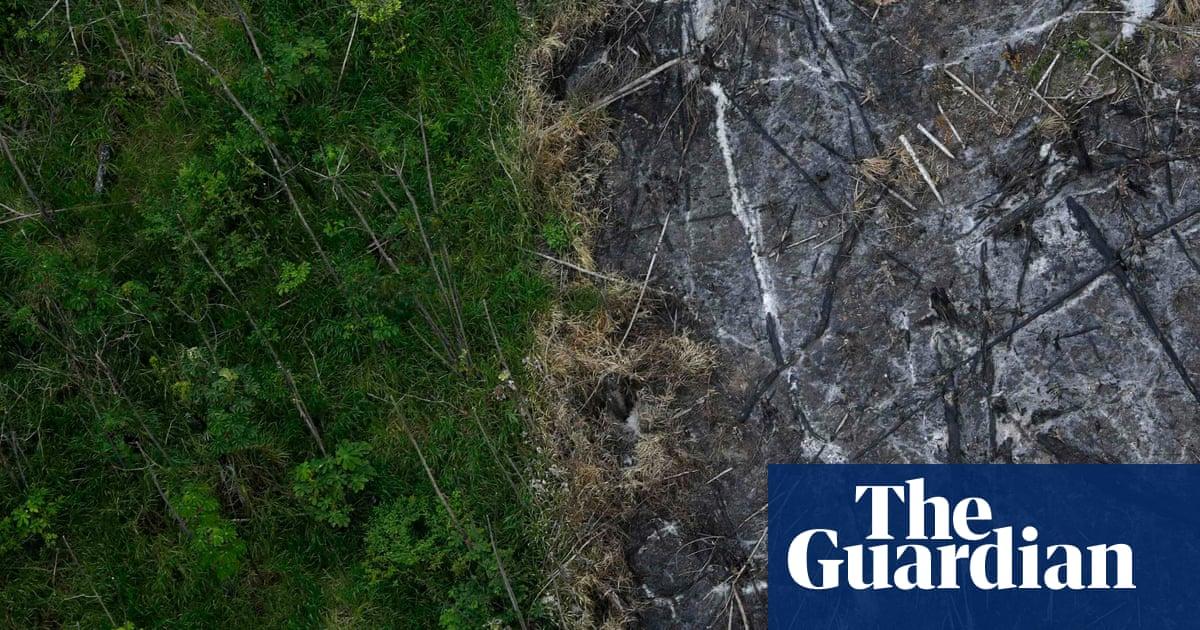 destruction of nature essay