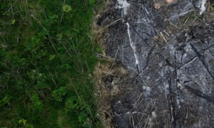 An area of the Amazon rainforest in Brazil that has been slashed and burned is seen from a police helicopter next to a section of virgin forest