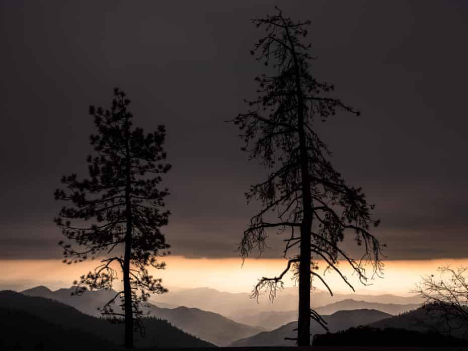A dead tree is silhouetted against the setting sun in Sequoia national park.