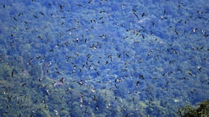 """A flock of Amur falcon fly over Doyang, Wokha district of Nagaland, India, in November 2018. Nagaland's mountains form a jagged spine along the Indo-Myanmar border. Home to the Naga, Tibeto-Burman people made up of an estimated 70 tribes, it is part of the Indo-Burma """"biodiversity hotspot"""", one of 36 such regions identified globally."""