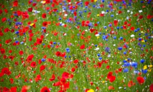 Wildflowers in Monmouthshire.
