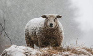 UK farmers fear the impacts of a no-deal Brexit would leave them out in the cold