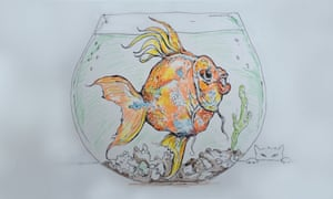 You're all wrong, dog and cat-lovers  Goldfish are the best pets of