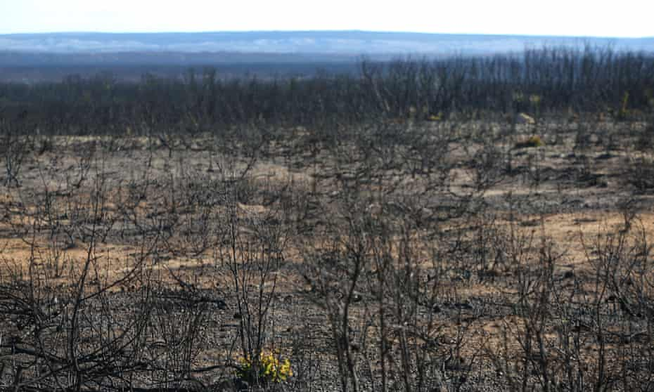 a landscape of thousands of blackened and burnt trees
