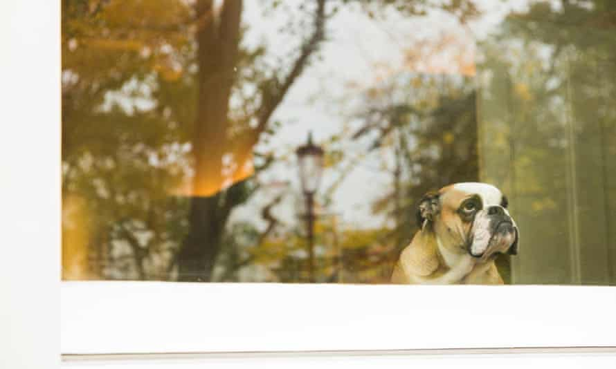 How sad is that doggie in the window?