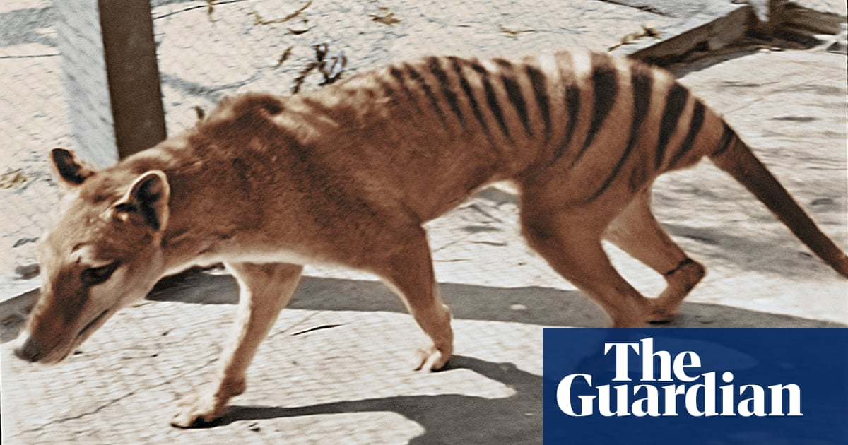 Tasmanian tiger devotees feed Australia's guilty obsession with a deliberate extinction