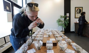 The nose knows: a customer sniffs display samples at Evergreen Cannabis in Vancouver.