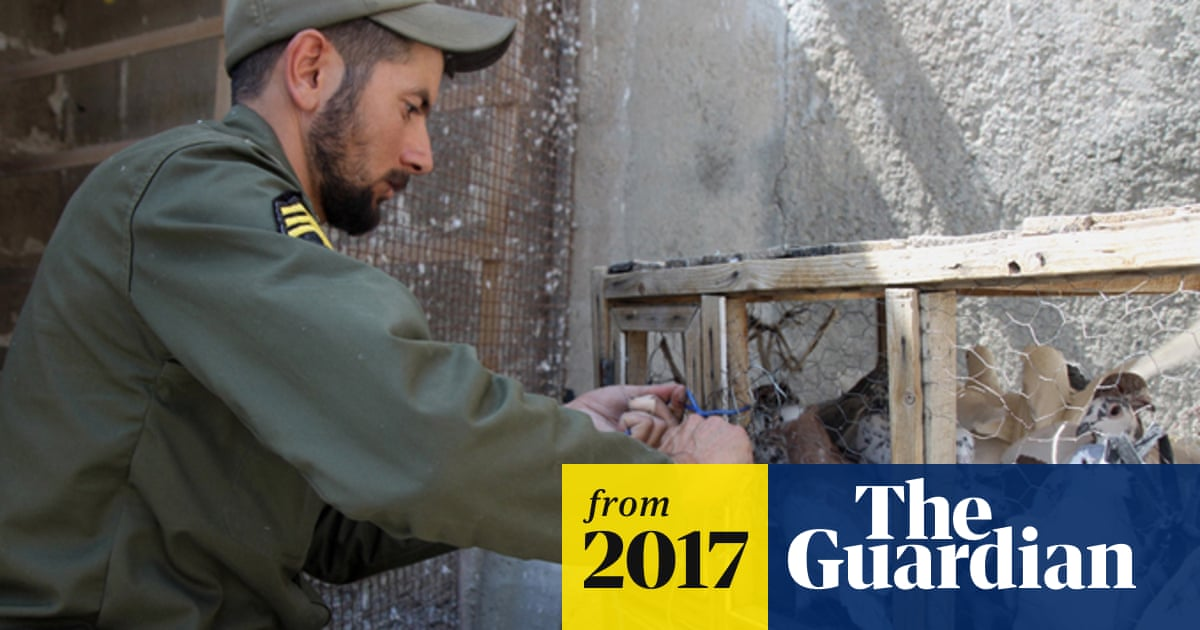 Iranian police seize carrier pigeons used to smuggle drugs