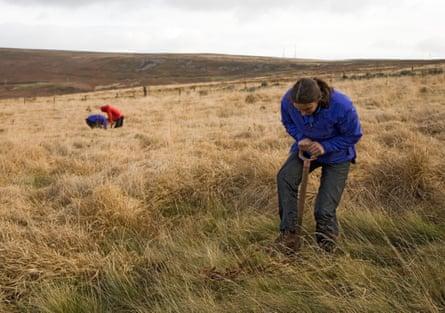 Volunteers planting trees on moorland in Blorenge, Wales.