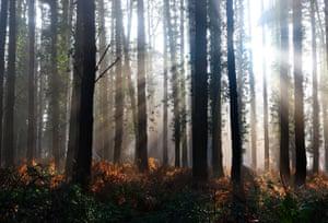 A winter sunrise in Hampshire woodland.