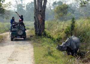 A one-horned rhinoceros roams as tourists take pictures, inside the Kaziranga national park in Nowgaon district of Assam, India