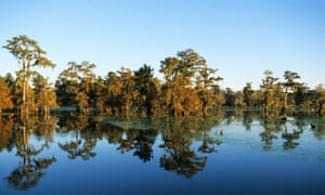 Cajun Country, Lafayette, Lake Martin, bald cypress.