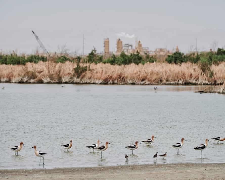 Wetlands still active with wildlife, as the Salton Sea has receded, in Imperial Valley, California.