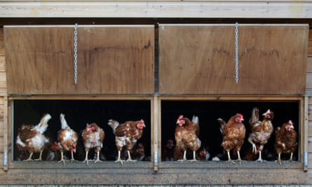 Under the scheme, one farmer heated an empty chicken shed, anticipating to make £1m over 20 years, the inquiry heard.